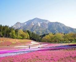 羊山公園芝桜の渋滞と混雑を避ける心構え