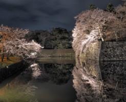 彦根城の桜の見頃と、期間中の注意点