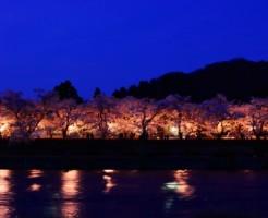 秋田、角館の開花予想と2つの名所の魅力
