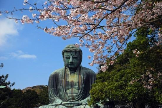 鎌倉の桜の開花情報は例年通り?主要名所