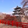 弘前城の桜、全種類と非常に希少な2本