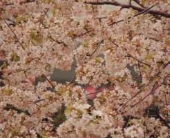 吉野山の桜と駐車場事情、観桜期の強烈さ