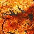 醍醐寺「紅葉の見ごろ」と「夜間ライトアップ」