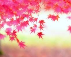新宿御苑の紅葉の「見ごろ」混雑回避と注意点