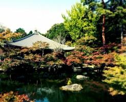 醍醐寺の紅葉の時期と混雑情報、駐車場の注意点