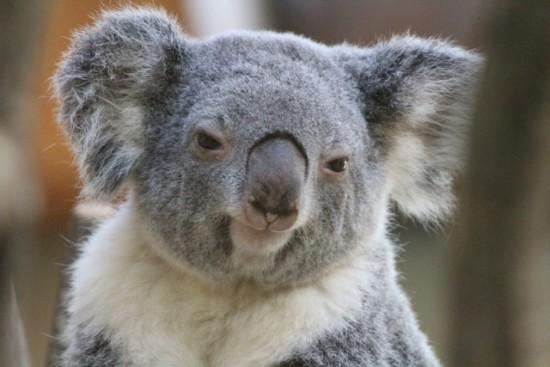 王子動物園の駐車場に関する情報と混雑回避方法