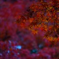 箱根の紅葉が美しい時期の見極め方と観るべき名所