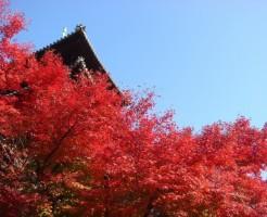 東寺「紅葉ライトアップ」の見ごろと混雑情報