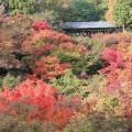 東福寺の紅葉ライトアップの時期と見ごろ