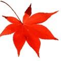 養老渓谷の紅葉の「見ごろ」と渋滞、駐車場情報