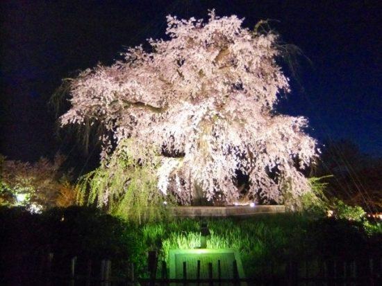 京都の桜名所27選、関西最高クラスの名所はココ